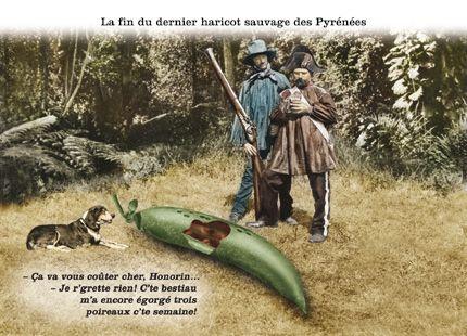 La fin du dernier haricot sauvage des Pyrénées / Plonk et Replonk