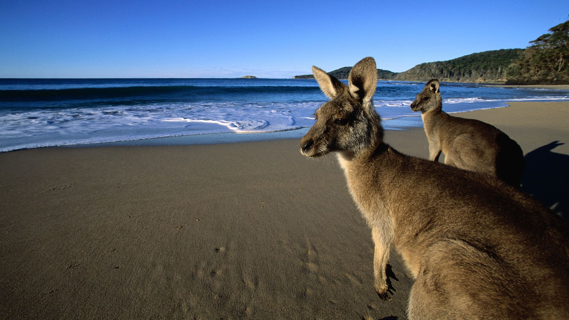 It's Australia! Who wouldn't want to see a Kangaroo. Best