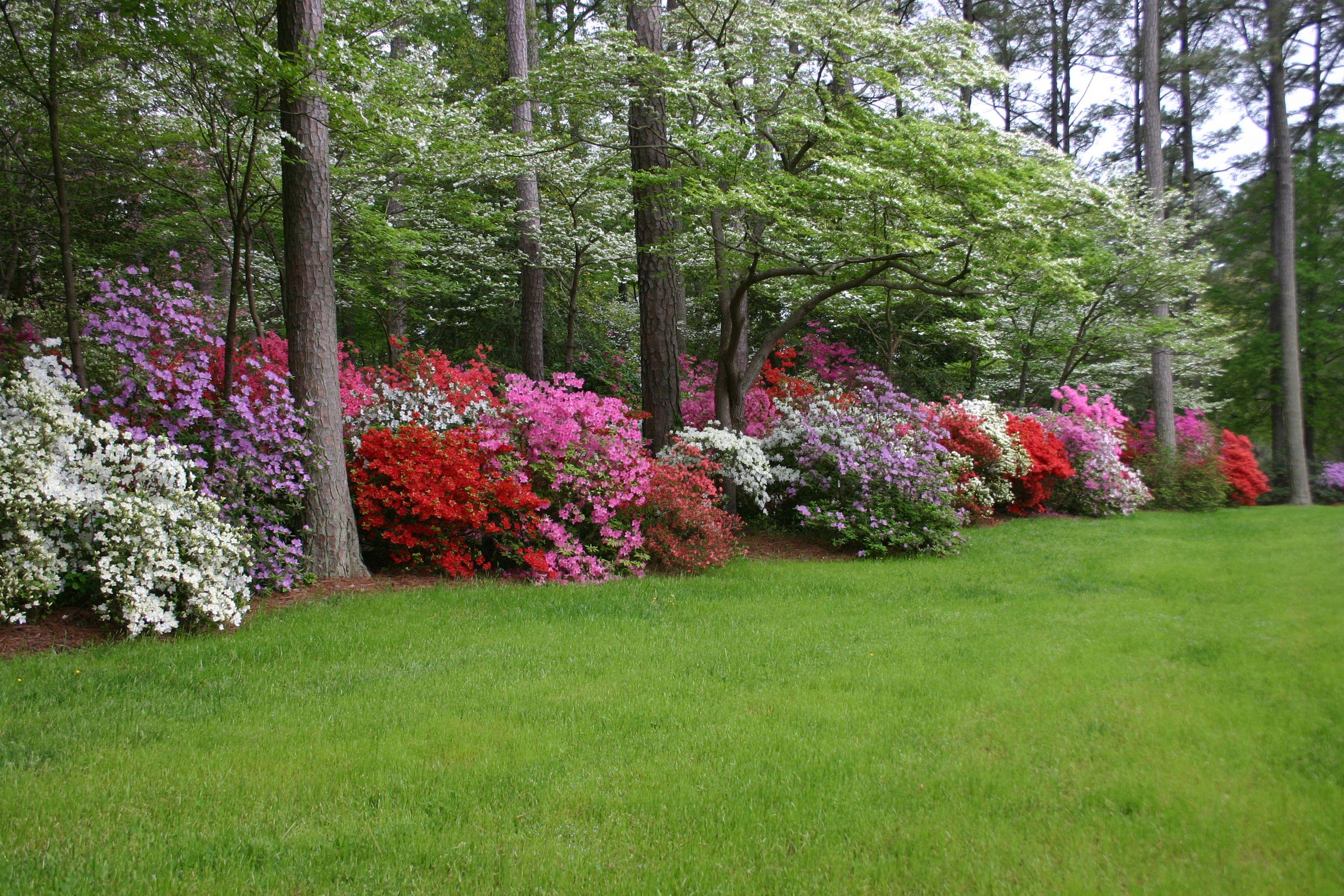 azalea gardens of art and betty