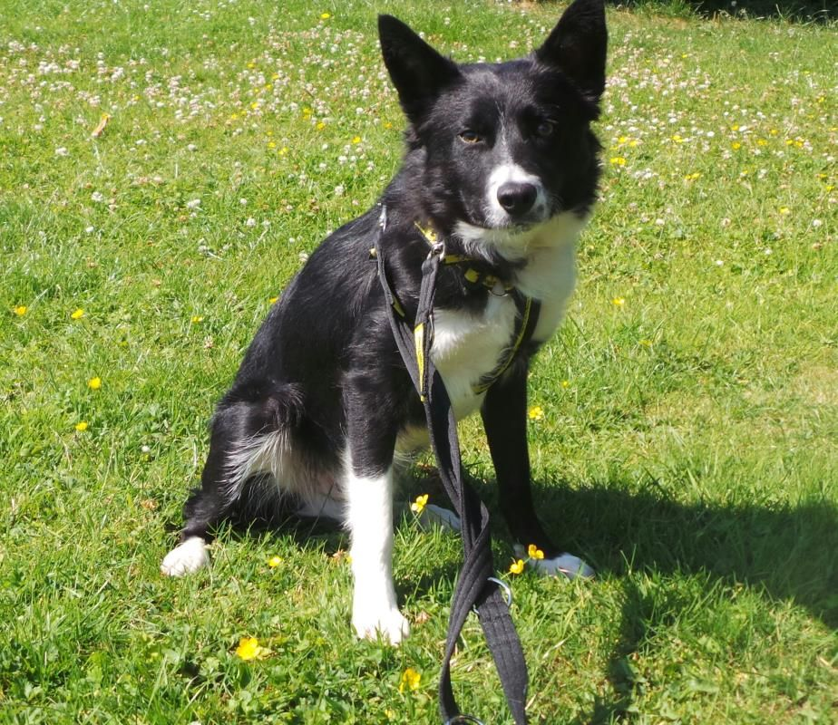 Junior is a very shy boy who has not had the best start in