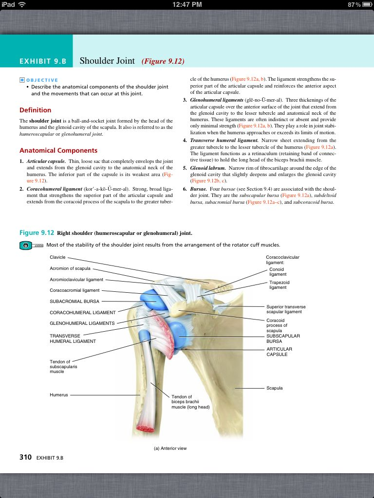 Principles of Anatomy and Physiology, Chapter 9, Joints, 22, book pg ...
