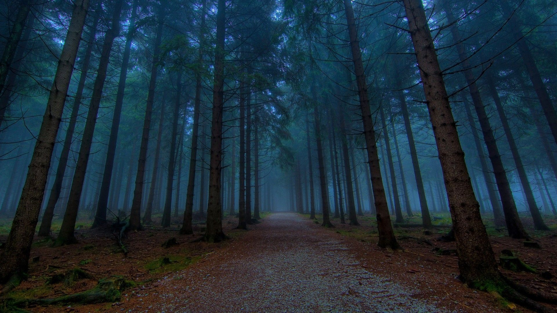 Forest HD Wallpapers Backgrounds Wallpaper 1920×1200 Dark