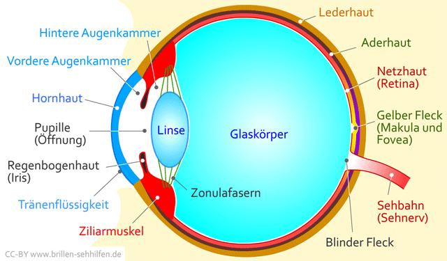 Das Menschliche Auge Physik