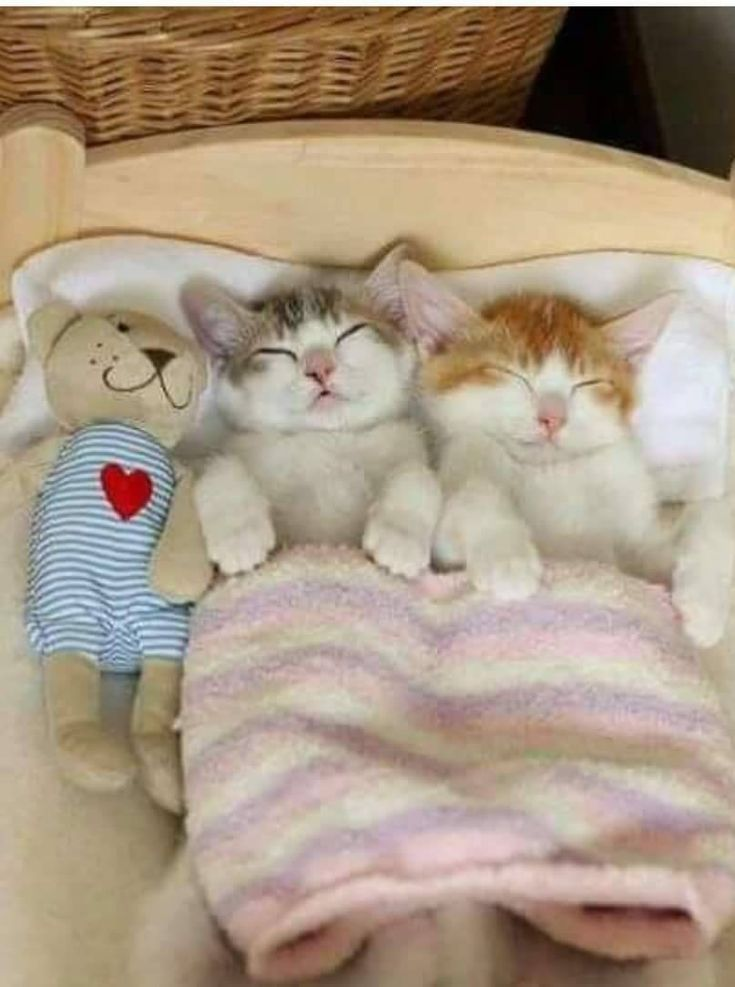 Cute Kittens Sleeping Kittens Cutest