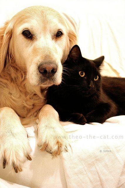 Best Friends In The World Les Meilleurs Amis Du Monde Golden