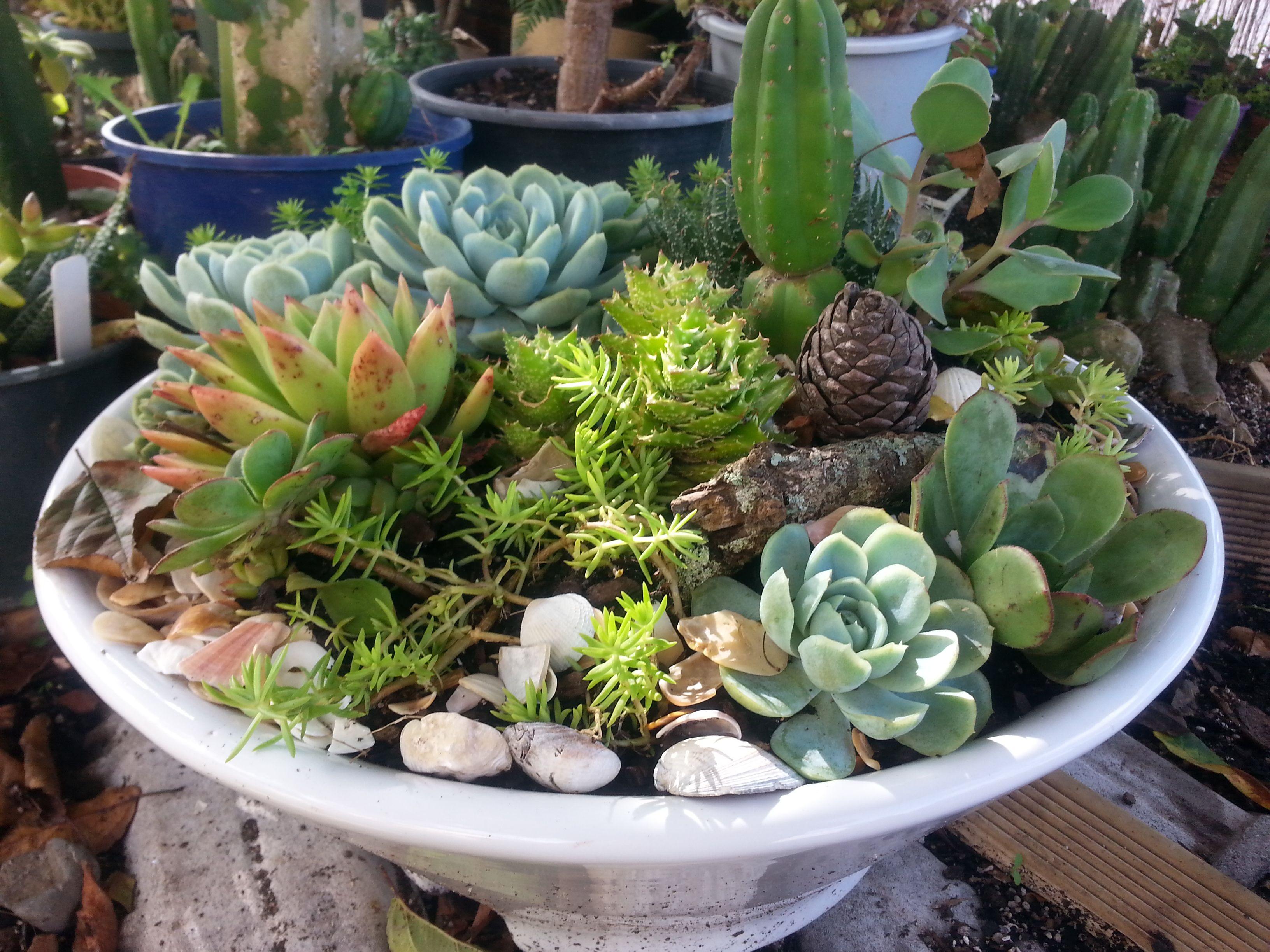 A succulent garden in a repurposed old ceramic bathroom for Succulent dish garden designs