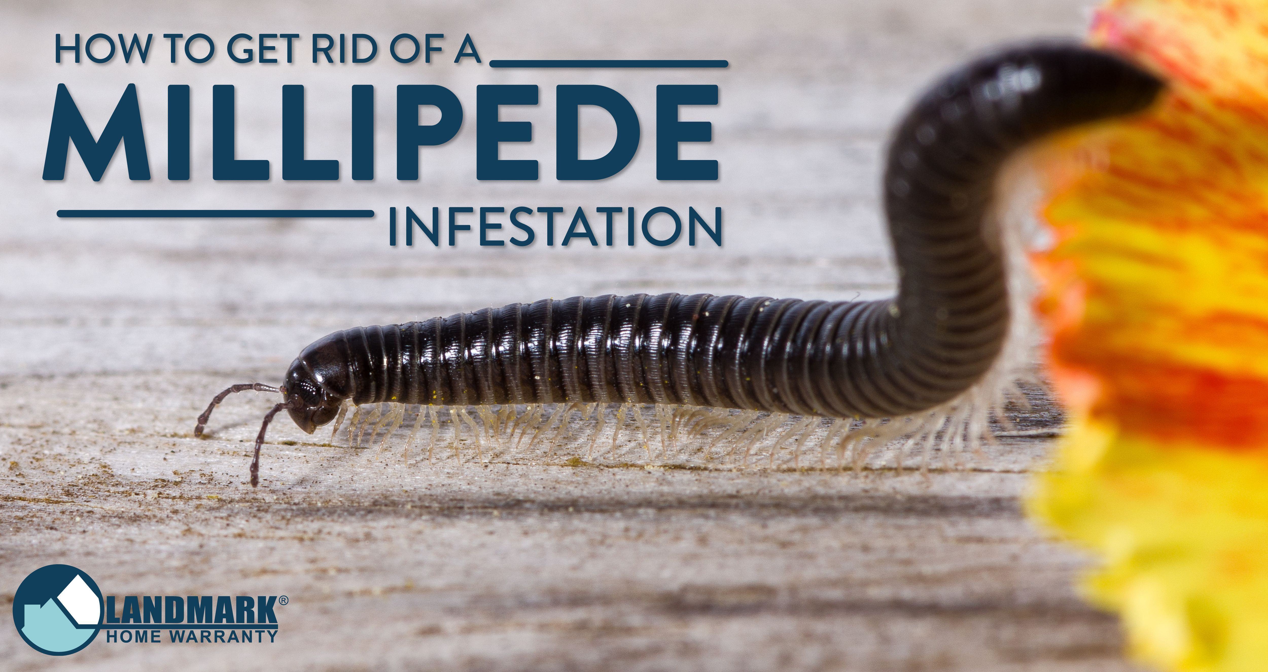 medium resolution of pin by best ways to control pest on pest control solutions pest pin diagram of centipede on pinterest