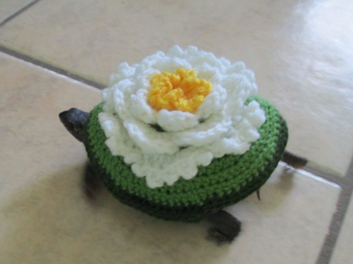 Pet turtle costume. Tortoise outfit. Flower costume. Flower outfit ...