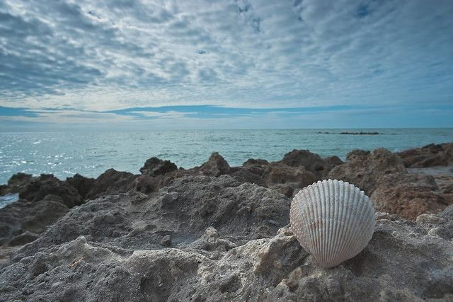 Seashell, Venice Beach Florida