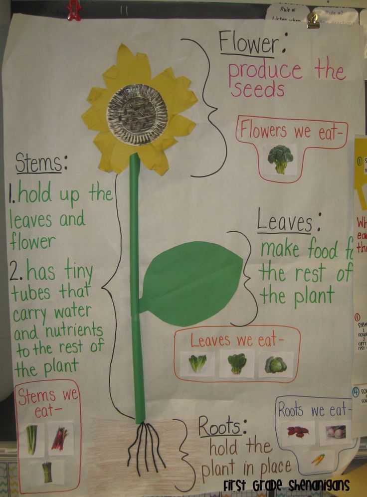 plant structure 2nd grade made this anchor chart to go