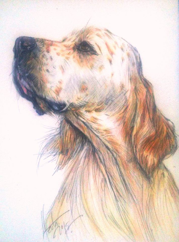 English Setter Drawing By Hector Baptista In 2019 Dog
