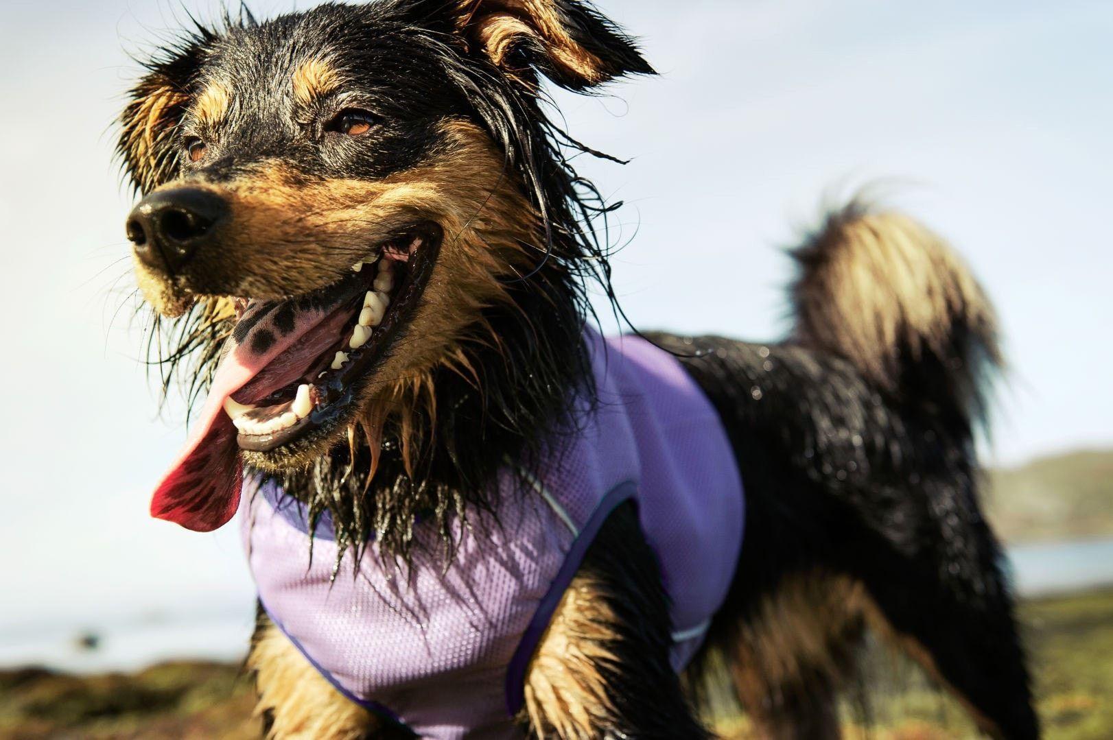 Hurtta Cooling Vest Dog Cooling Vest Aggressive Dog Dog Behavior