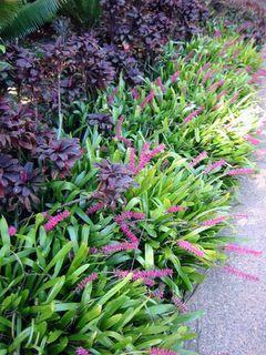 Border Plants Nz Landscape Ideas For Gardens Auckland New