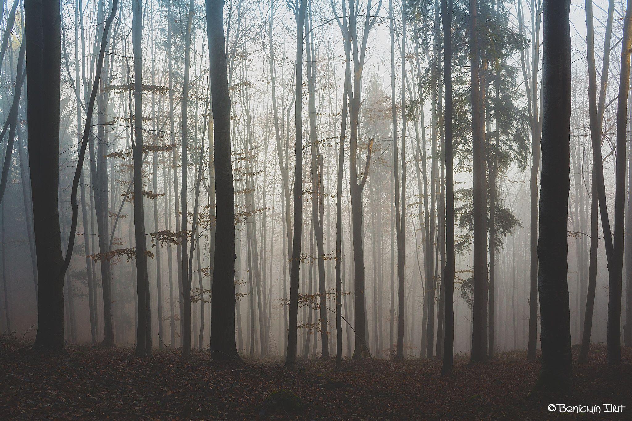 Fog.01 by Beniamin Iliut