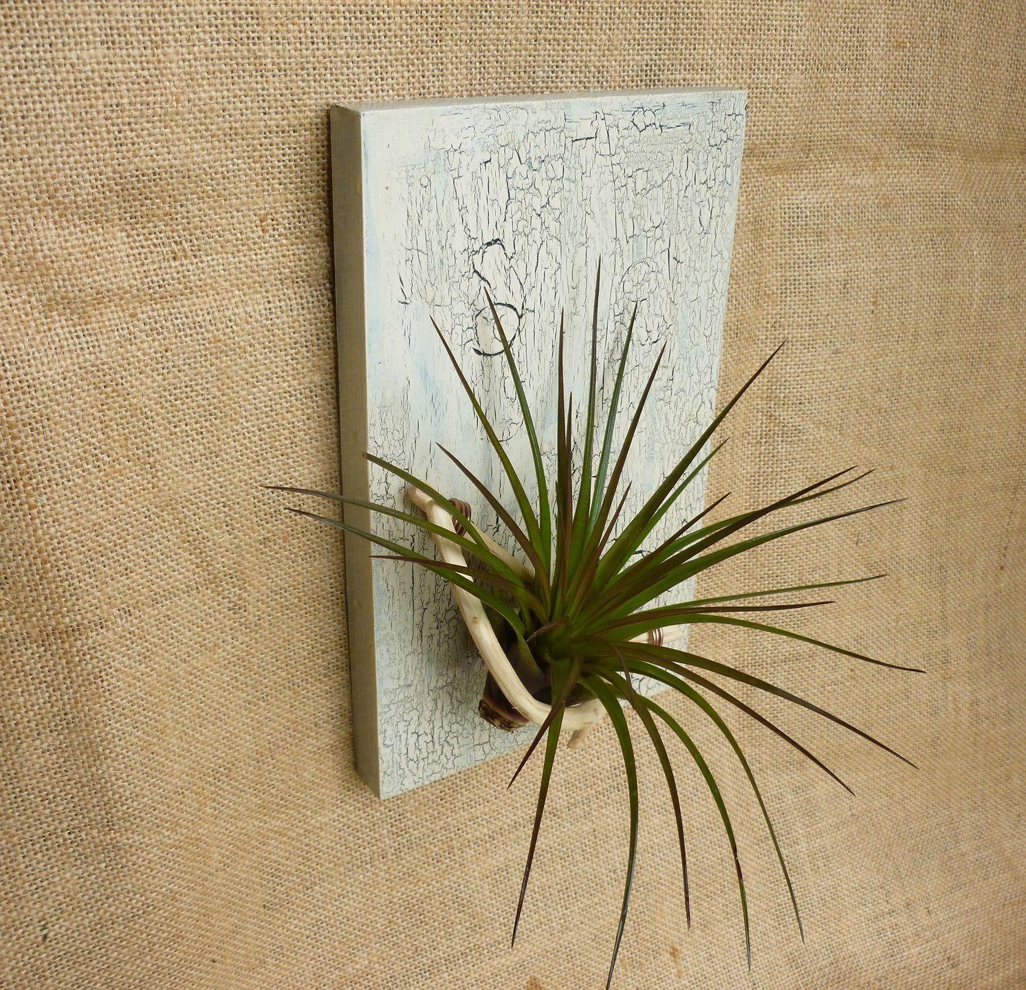 tillandsia air plant holder tillandsia plante a rienne. Black Bedroom Furniture Sets. Home Design Ideas