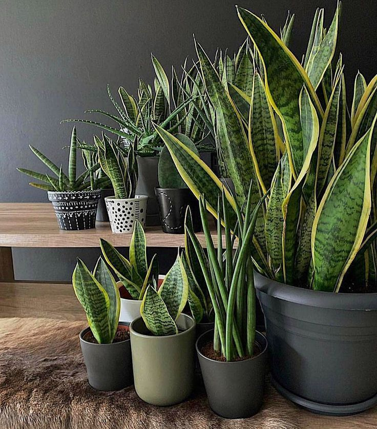 80 DIY Plant Stand Ideas To Fill Your Room With Greenery #diyplantstand