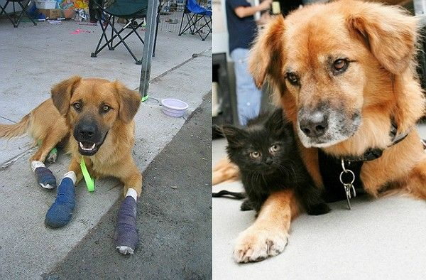Boots Then And Now All Images Via The Arizona Humane Society