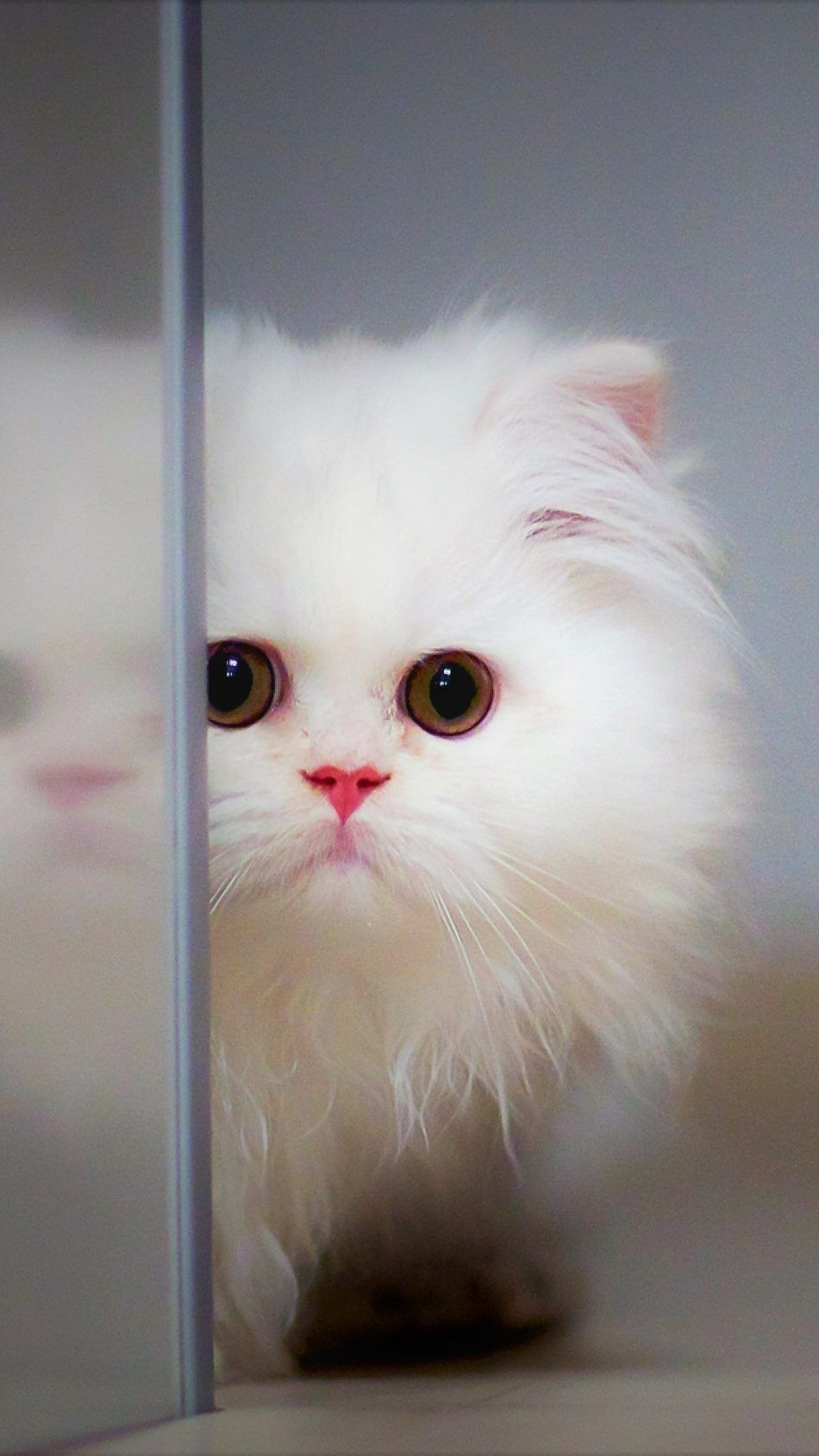 Adorable Cute White Kitten Kitten Wallpaper Cute Cat Wallpaper