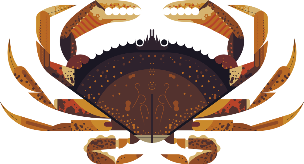 Dungeness Crab Owen Davey Illustration in 2020 Crab