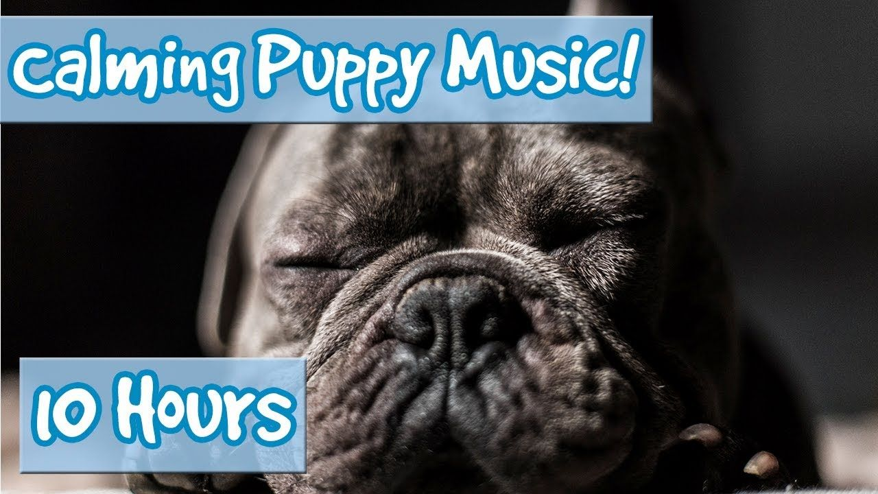 How to calm your puppy down ways to relax your dog with