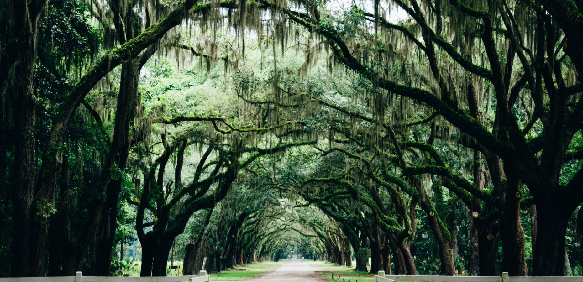 Savannah Ga Things To Do One Day Guide Call It Adventure Savannah Chat Southern Gothic Savannah Attractions