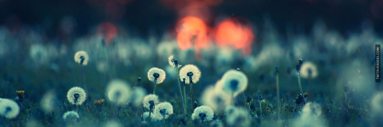dandelions fields nature sunset Twitter Header Cover ...