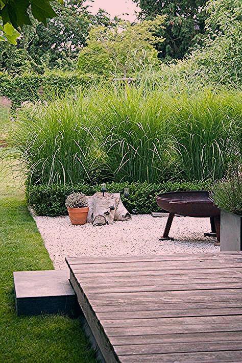 Photo of Gartengräser Sichtschutz