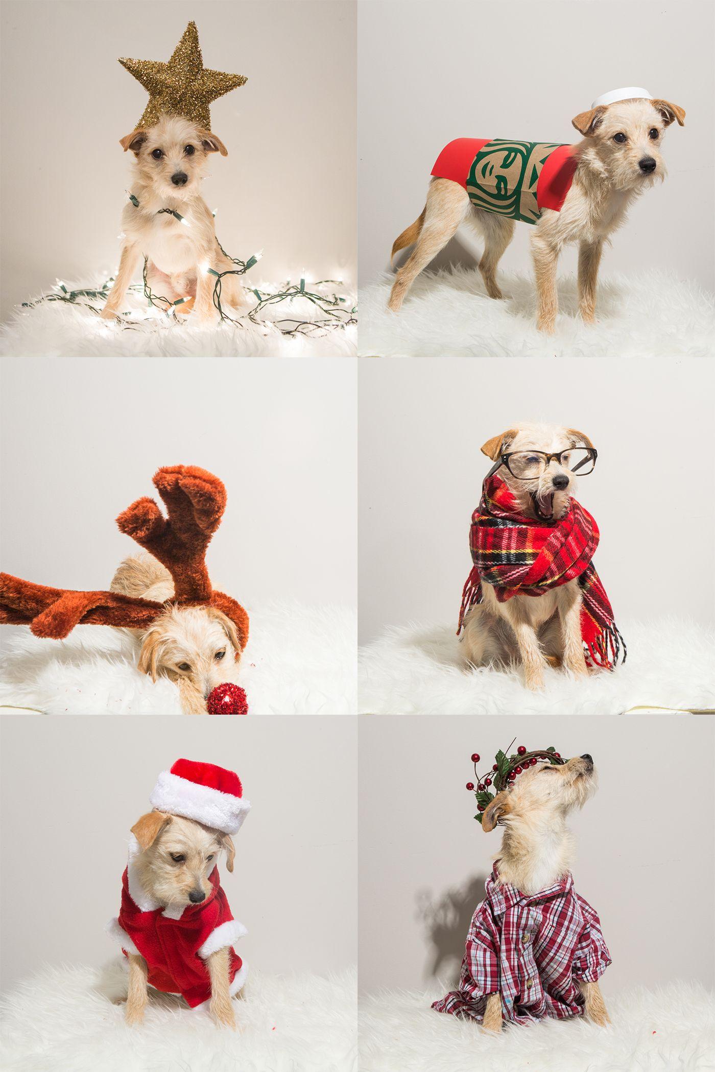 Christmas Costume Ideas For Dogs Cats Santa Dog Christmas Tree