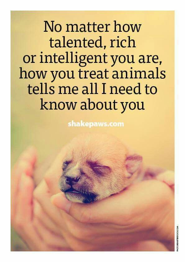 How You Treat Animals Animal Quotes Dog Quotes Dogs