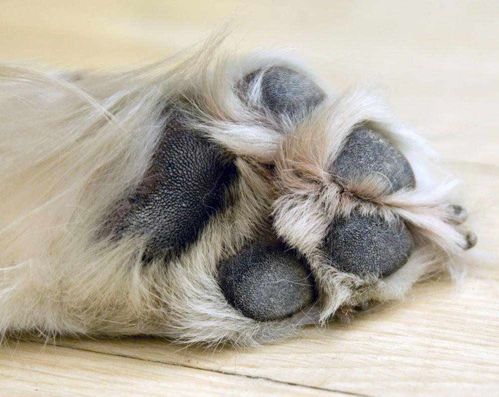 """wunderbare Kurzgeschichten über einen geliebten Hund ... """"COLUMBO - Ein Hund für alle 'Felle'"""" - als Buch oder E-Book!"""