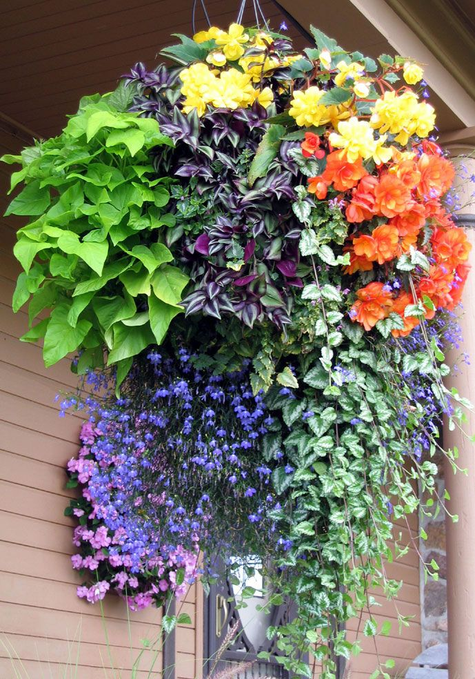 Hanging Flower Basket Inspiration Container Flowers Hanging