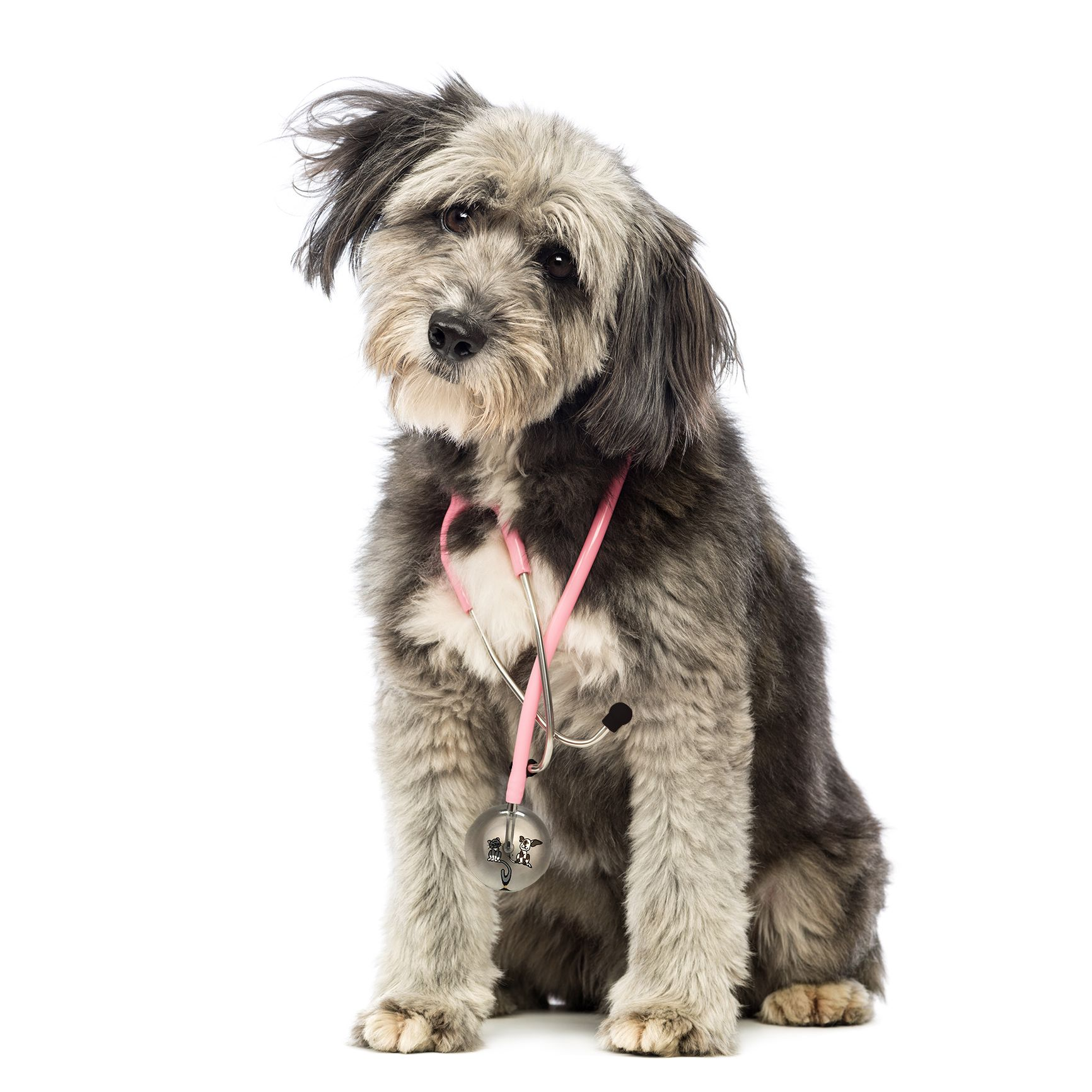 how to use a stethoscope on a dog