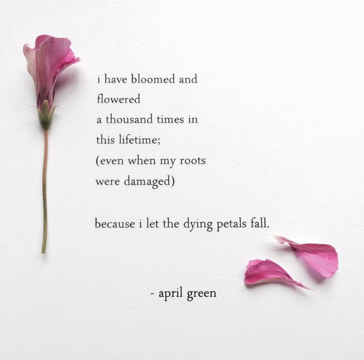 Quote Of The Day From The Los Angeles Times: Pin By Umaya Ys On April Green