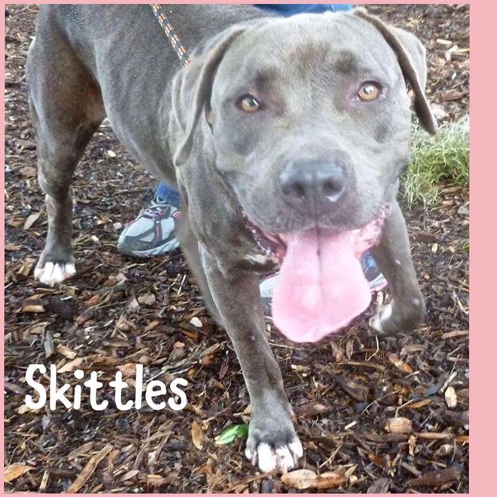 SKITTLES IS BACK as a stray! THE PERSON who adopted her in