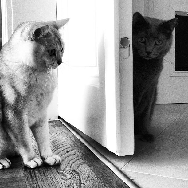 Most cats, when they are Out want to be In, and vice versa, and often simultaneously.  #cat #kitten #animal #cute