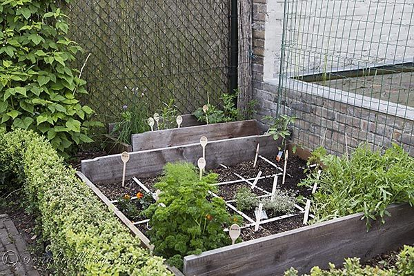 My Mini Vegetable Garden And How I Do Square Foot Gardening