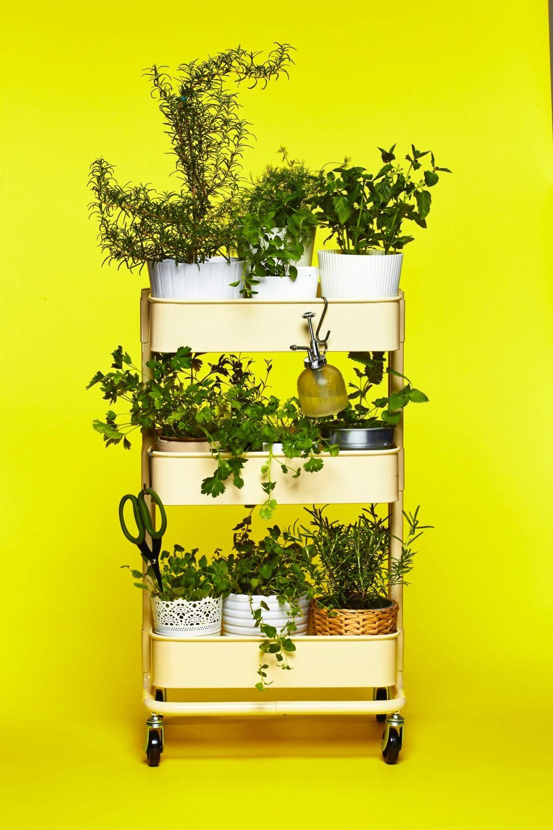 The IKEA RÅSKOG Cart as Herb Garden Herb garden in