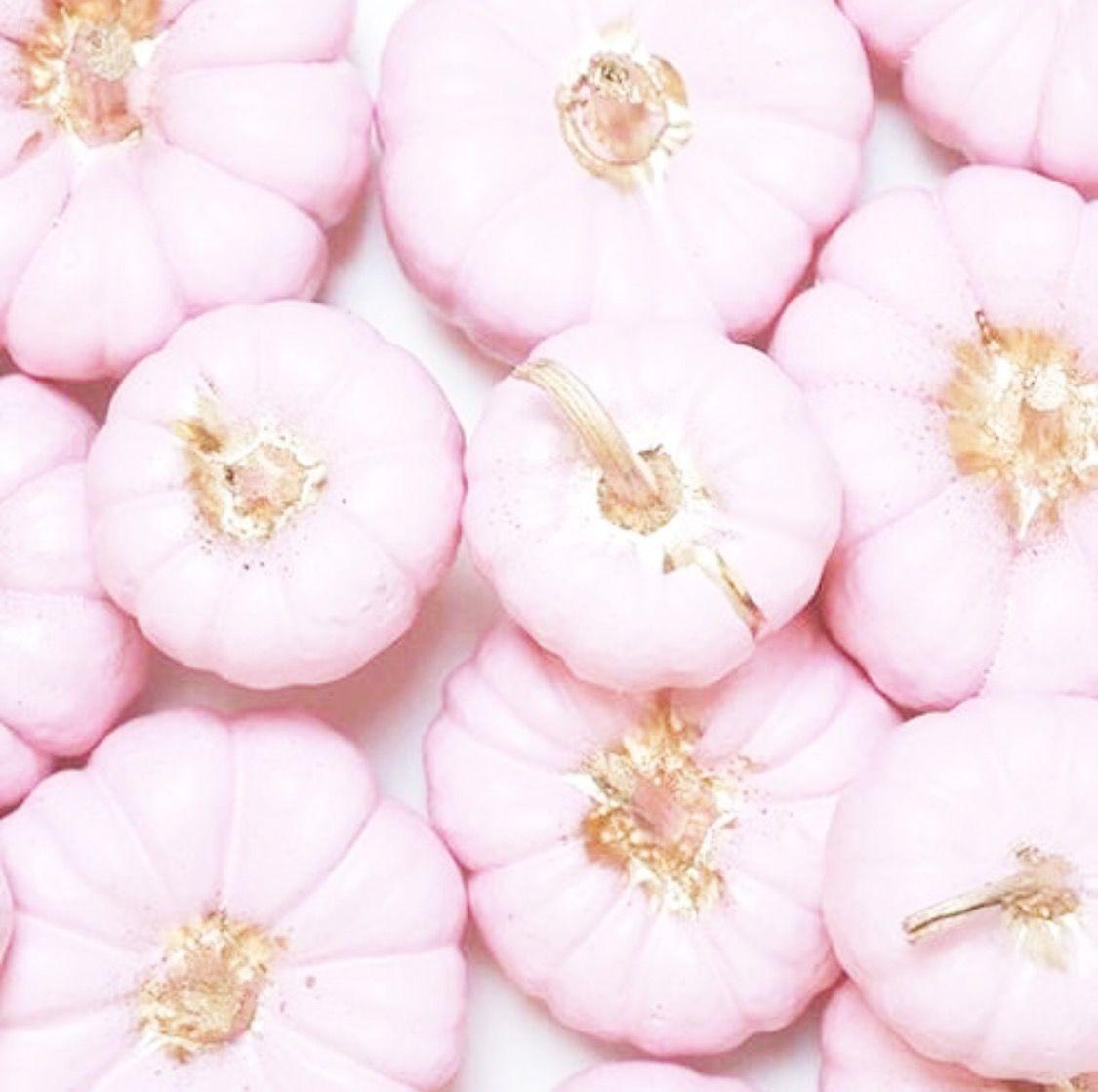Pin by ღ Kayla ღ 🎃🎀 on ♡ Pumpkin Spice And Everything Nice ...