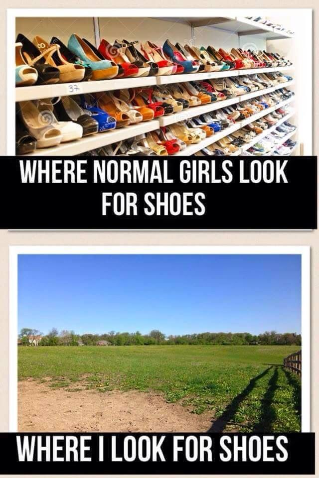 Pin By Anna Catherman On Just For Fun Horse Jokes Funny Horses Horse Riding Quotes