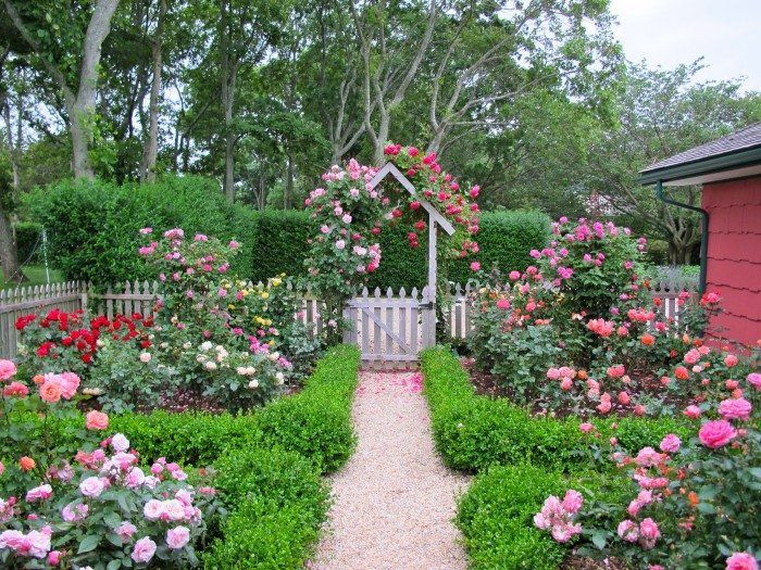 Amazing Roses Garden For Bakyard Cottage With Some Greeneries ...