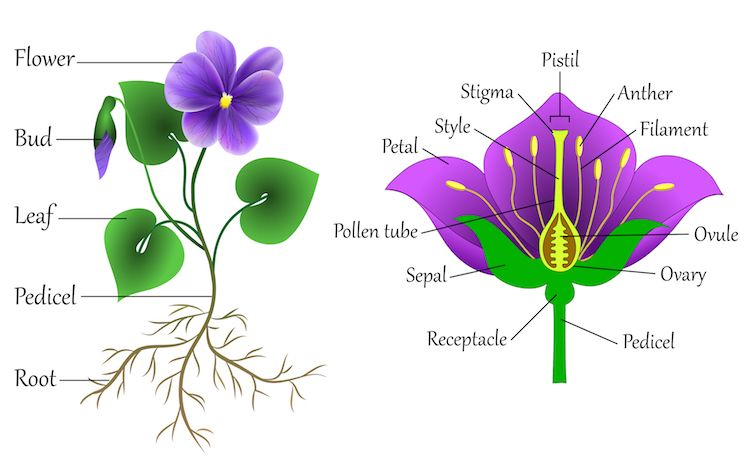 Learn How To Draw Thousands Of Flowers Using The Same Simple