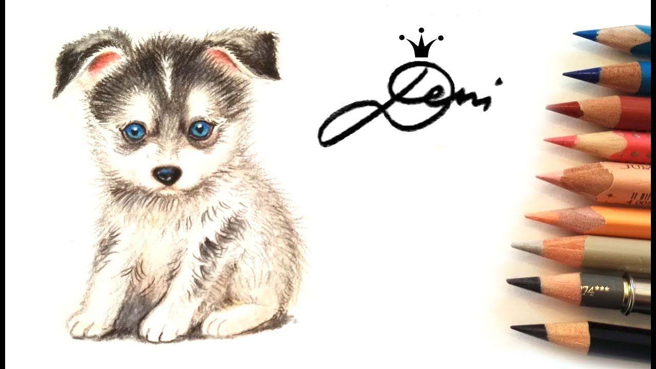 Pin Von Deni Zeichnet Auf Hund Zeichnen Lernen Hund Malen Hund Zeichnen Hund Zeichnungen