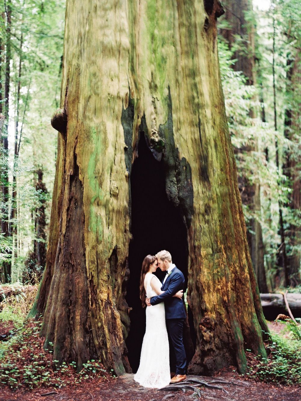 Elopement among the redwoods redwood forest wedding