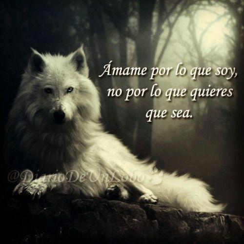 Lobo Frases Buscar Con Google Yuri Pinterest Wolf Frases Y