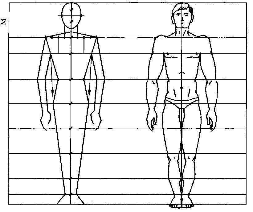 Правильные пропорции картинки