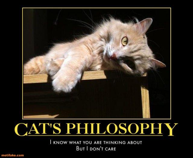 Insomnia Meme Cats Philosophy Demotivational Poster