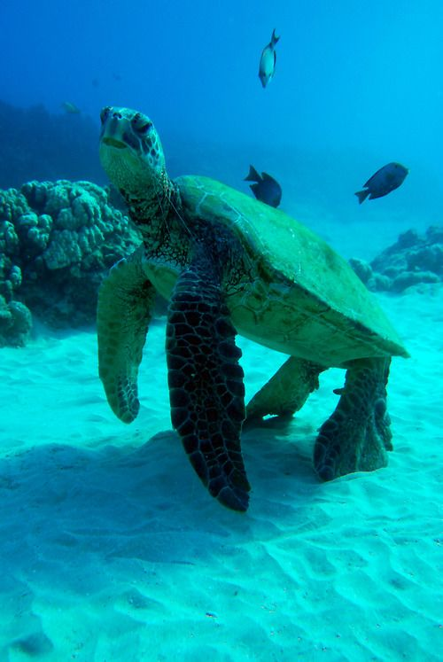 how to become a marine animal rescuer