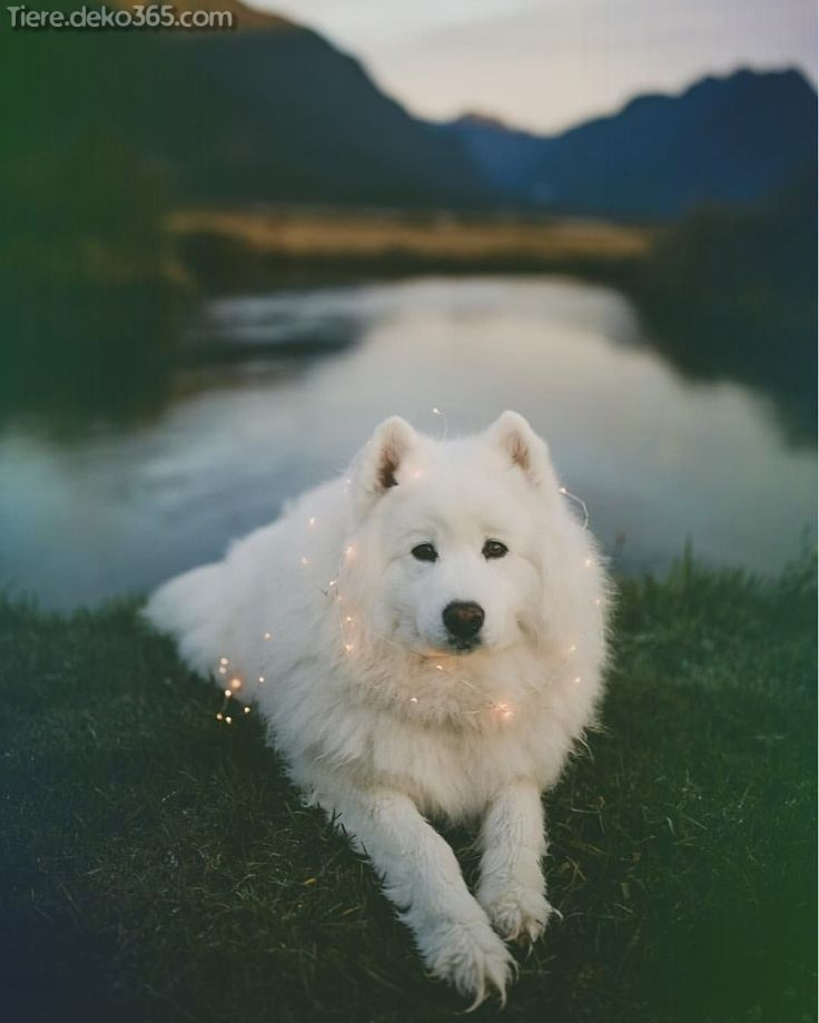 Photo of Creative and great beautiful dog pictures