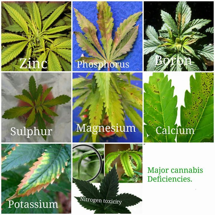 Pin On Growing Marijuana Indoors