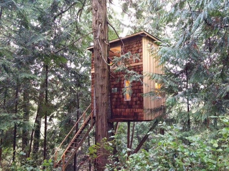 Este joven construyó su pequeña casa en un árbol, ¡y los beneficios - casas en arboles